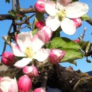 Pratica Yoga dedicata alla Primavera