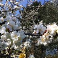 Aspettando la Primavera, il momento di rigenerarsi